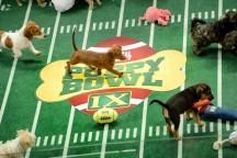'Puppy Bowl' Scores