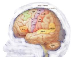neuroscience-brain