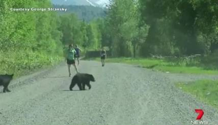 https://au.news.yahoo.com/video/watch/31654261/black-bear-family-interrupts-triathlon-runners/